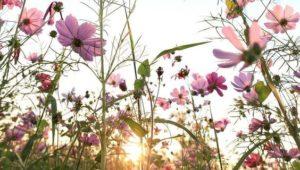 Sunshine - Sunday weather forecast