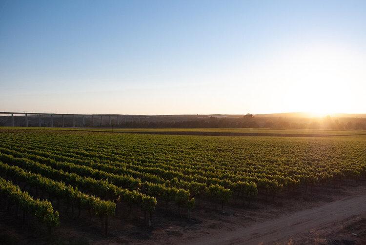 Gorgeous West Coast wine estates to check out this flower season