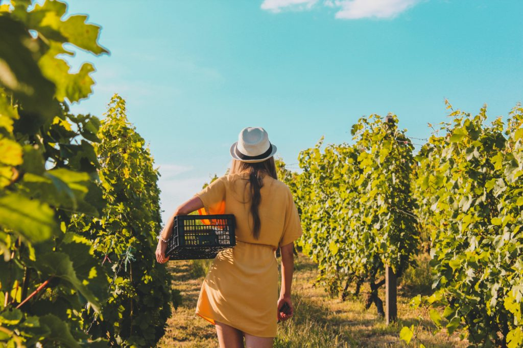 Treat your lady to one of these wine farm adventures this Women's Day
