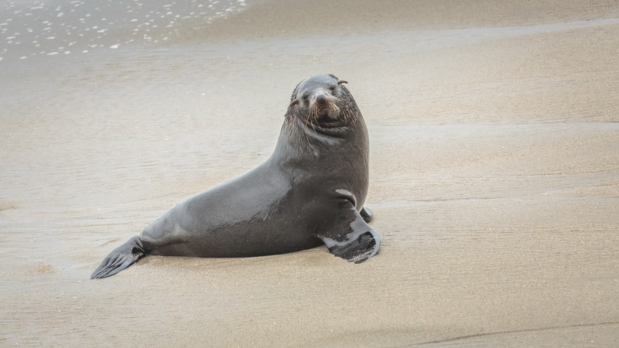 WATCH: Plastic pollution is endangering the lives of Cape Fur seals