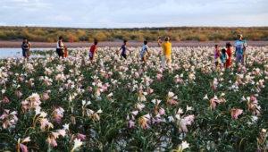 flower season accommodation options