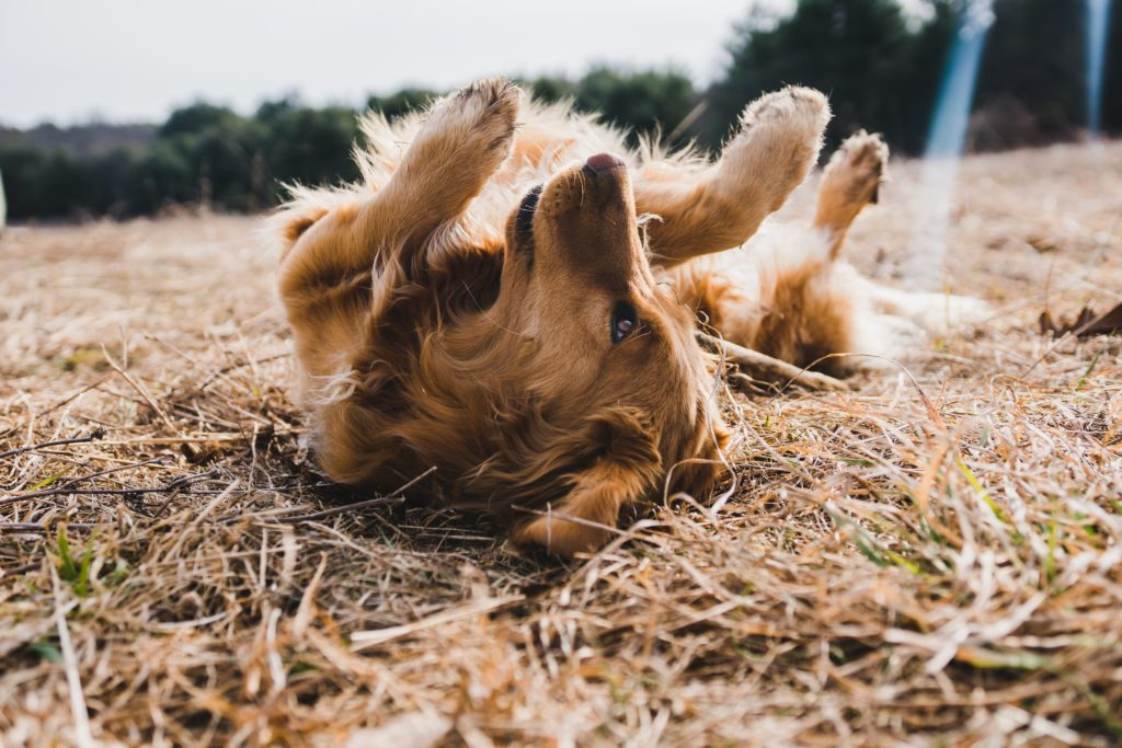 """""""Give that dog a bone"""": are bones actually good for dogs?"""