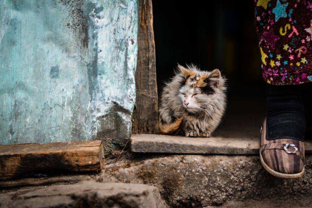 Alleged Cape Town cat killer taken in for questioning