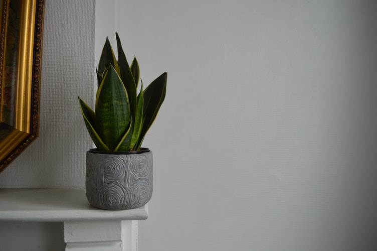 The best house plants for alleviating stress