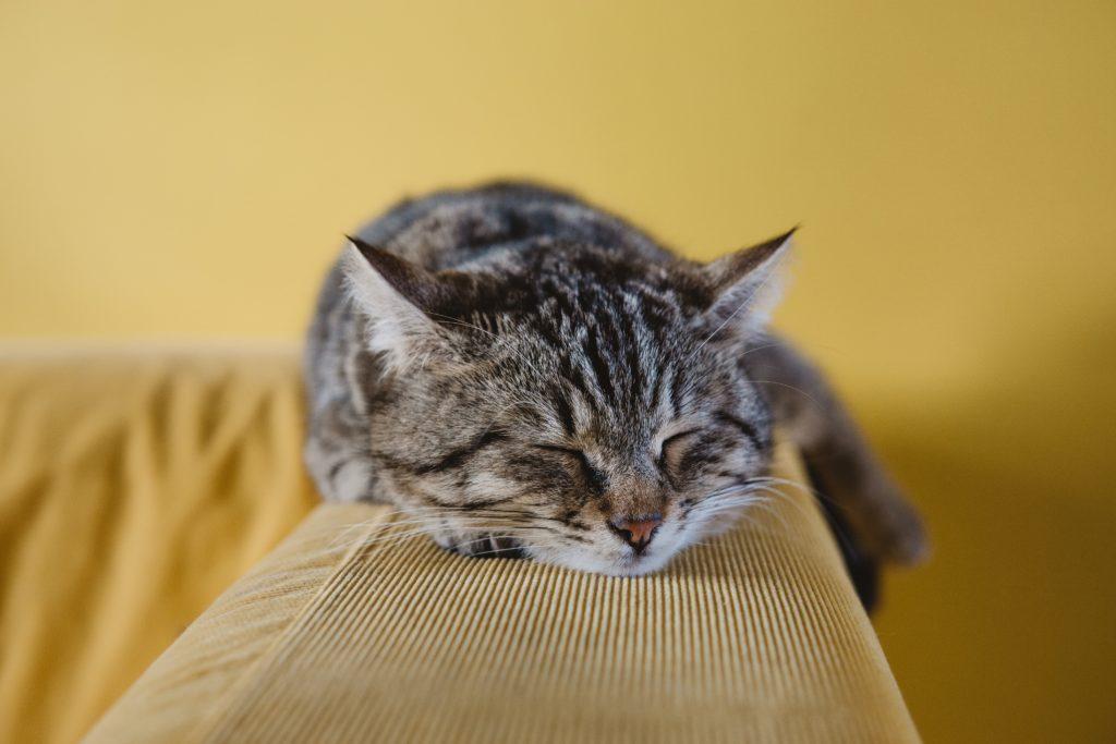 Cat killer - death toll of Manenberg cats rises