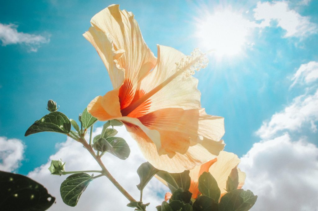 Sprinkle some sunny magic on your Thursday - Forecast