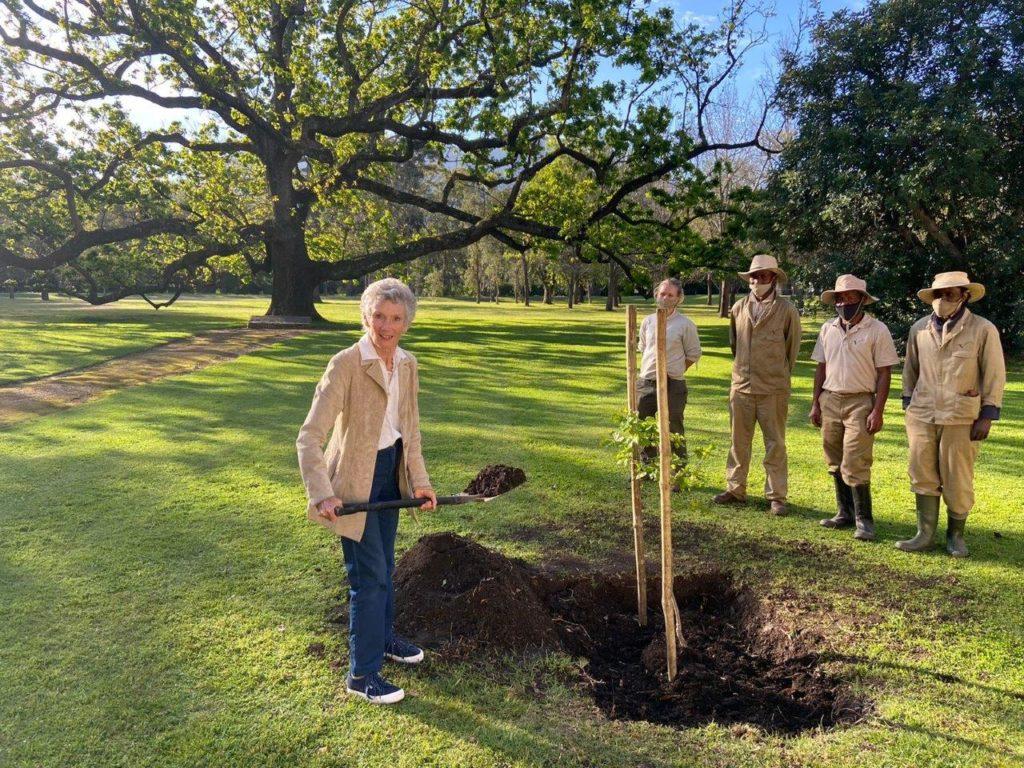 Vergelegen Wine Estate in Somerset West plants trees for posterity