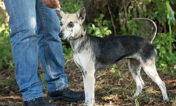 Brave warrior Kuhle is in need of a furever home, Cape Town!