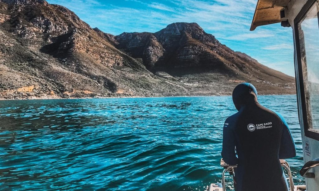 Embark on a snorkelling adventure with Cape RADD and explore the underwater world
