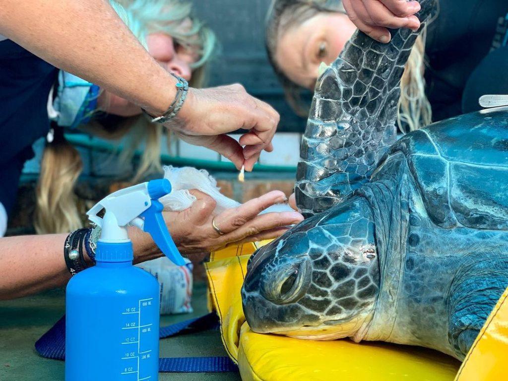 Meet Geri, the latest turtle rescue at the Two Oceans Aquarium