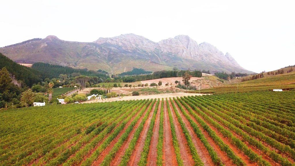 Muratie Estate in Stellenbosch celebrates Heritage through food and wine