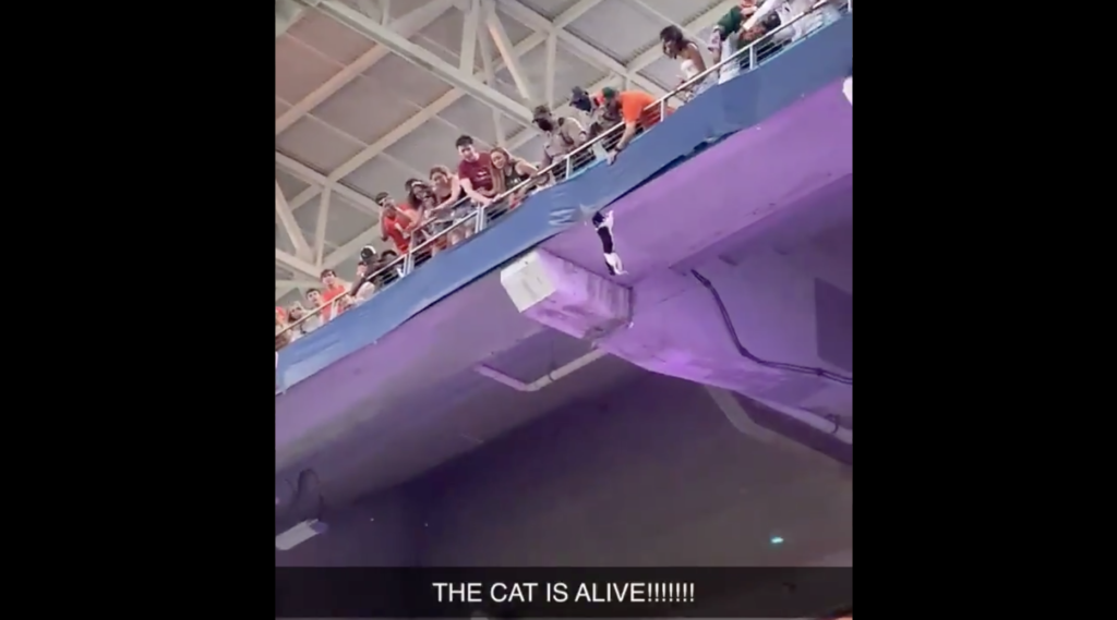 WATCH: sports fans save a cat hanging from stadium in viral video