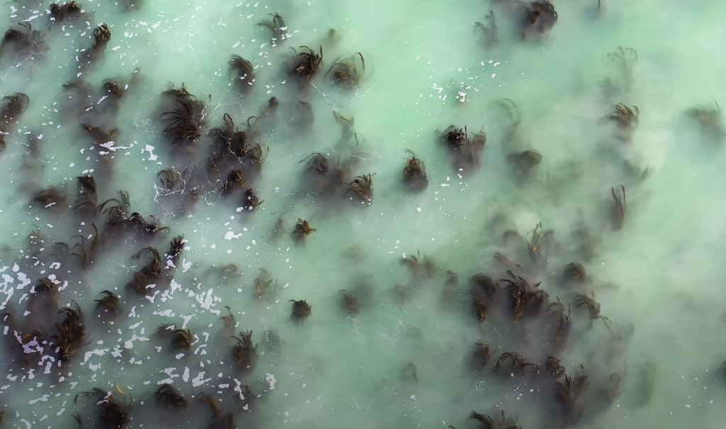WATCH: Cape Town's Kelp Forests keep going viral