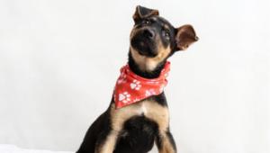 Dog makeover get adopted