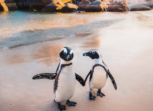 Could penguins be aliens? This is a real conversation scientists are having
