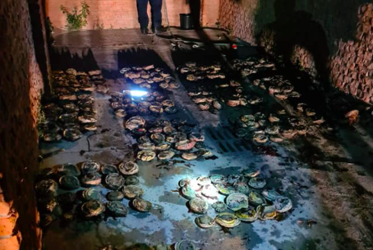 Abalone and crayfish seized by Law Enforcement Auxiliary officers