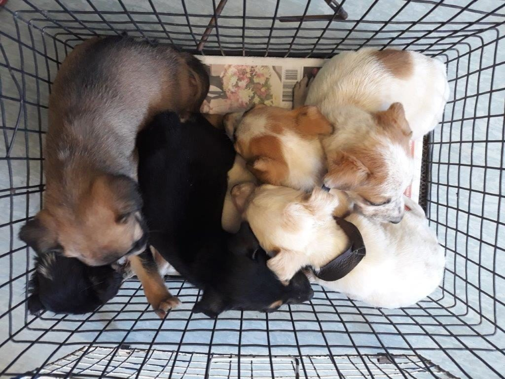 Animal Welfare Society of SA concerned about increase in foster fails and adoptions