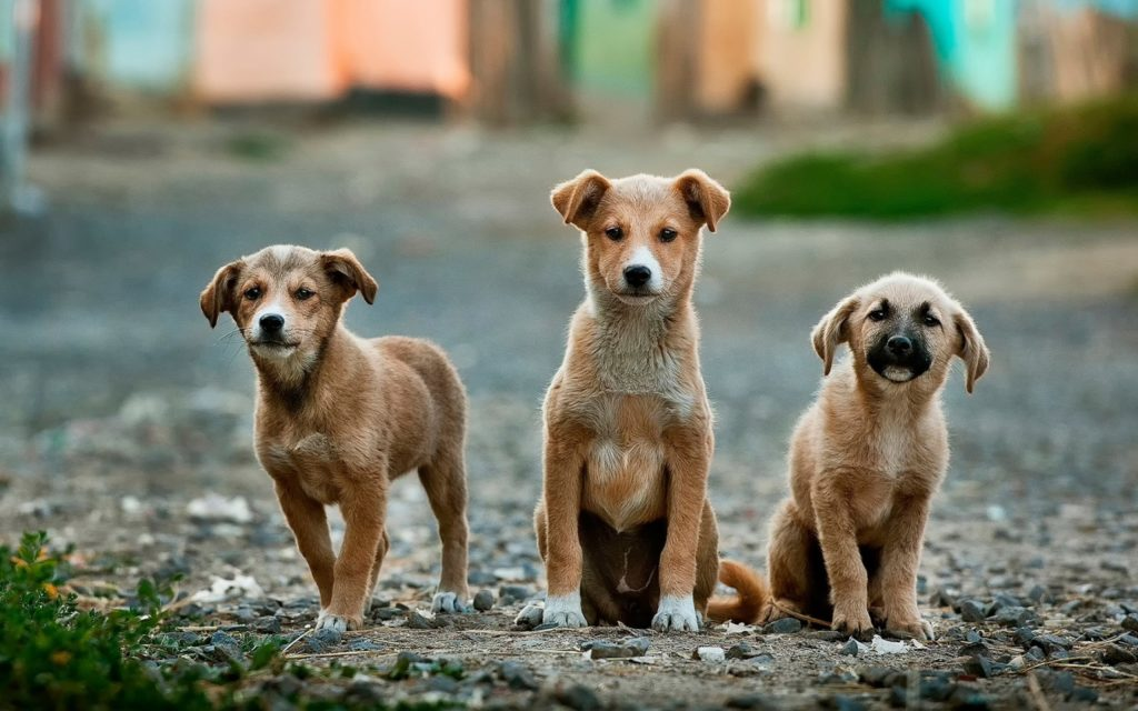 Dog poisoning on the rise - Tin Can Town organisation left with no leads