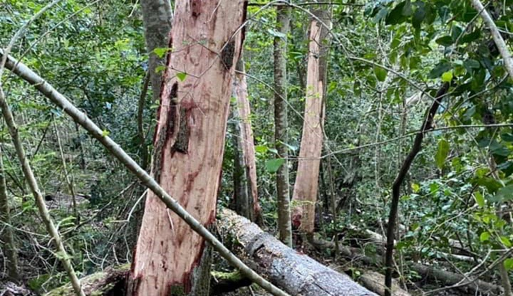 The battle against bark stripping continues - local group steps up