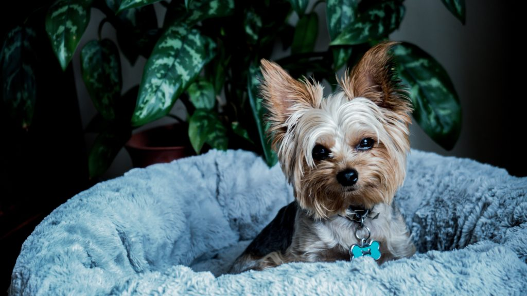 Justice has been served for Yorkshire Terrier who was reportedly kicked to death