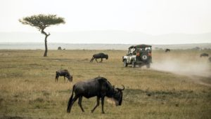 weekend safari getaways