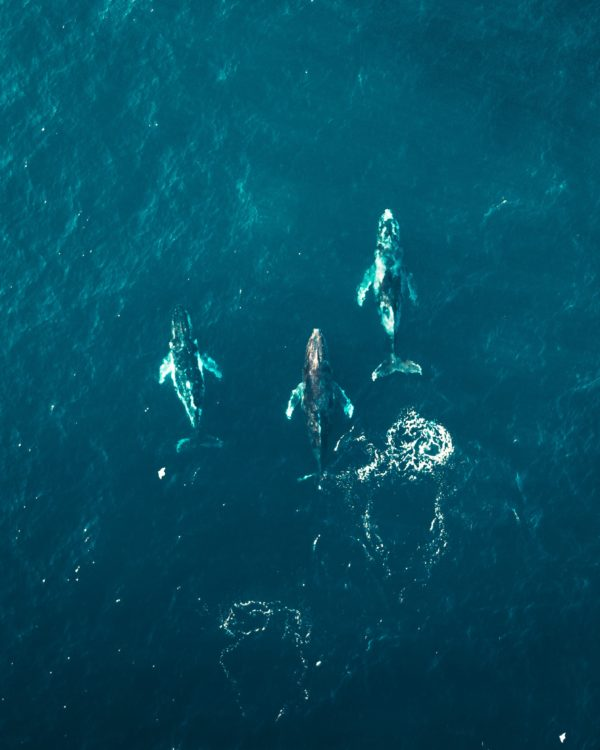 Hermanus Whale Watching spots