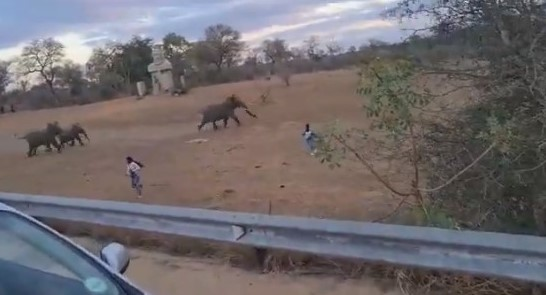WATCH: Close call for tourists who were almost trampled by elephants