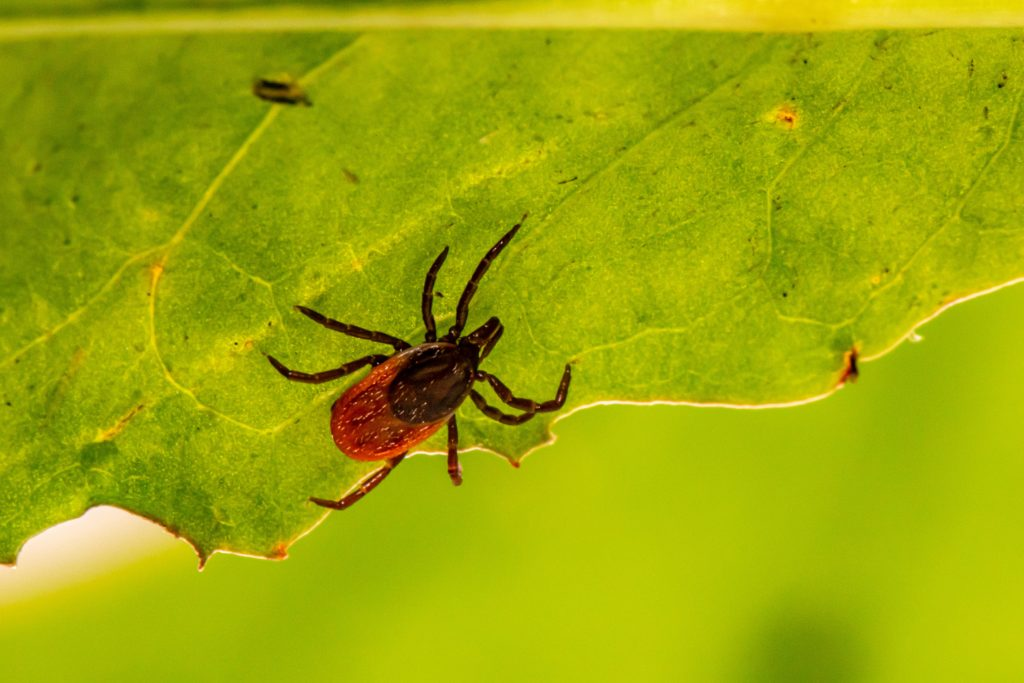 Cape of Good Hope SPCA sees an increase in deaths caused by Tick Fever