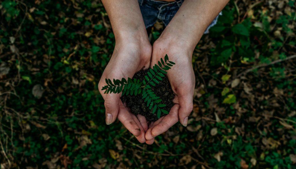 Trees everywhere! Stellenbosch does their part for Arbor Week