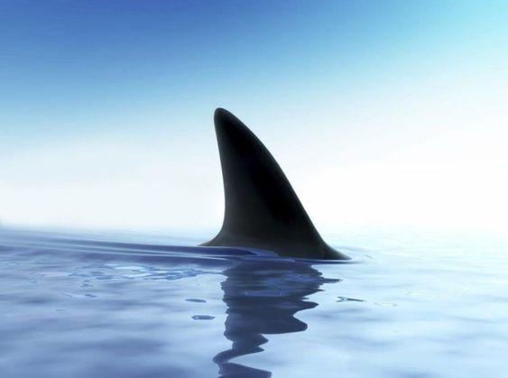 Shark Alert: Port Alfred