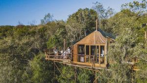 western cape treetop getaways