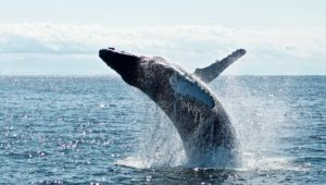 Western Cape Whale watching spots