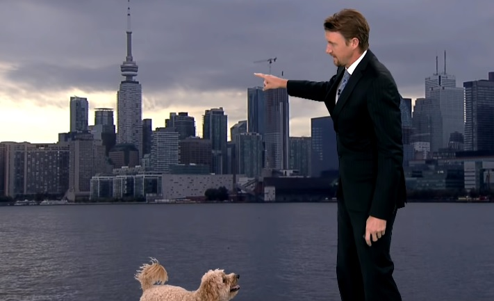 WATCH: Dog interrupts the live weather report in the most adorable way