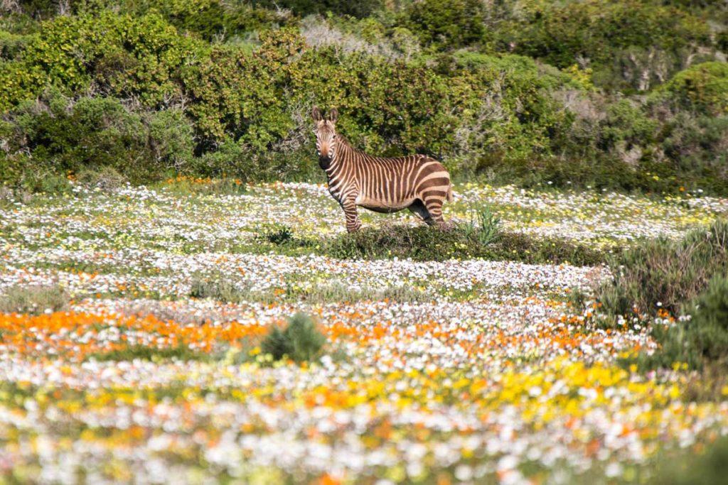 10 exquisite natural wonders around Cape Town