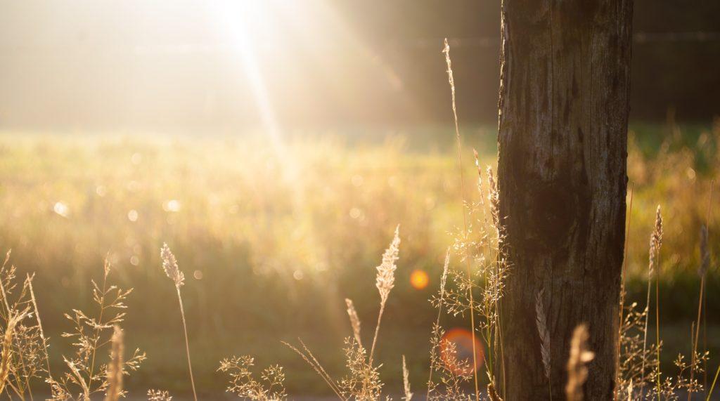 A walking on sunshine kind of Monday - Forecast