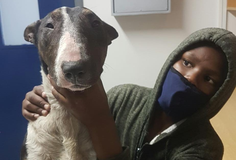 Not all heroes wear capes: the tale of a boy who rescued an abandoned Bull Terrier