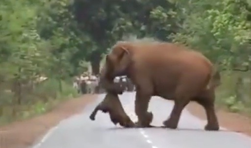 WATCH: Elephants 'mourn' together after losing their calf