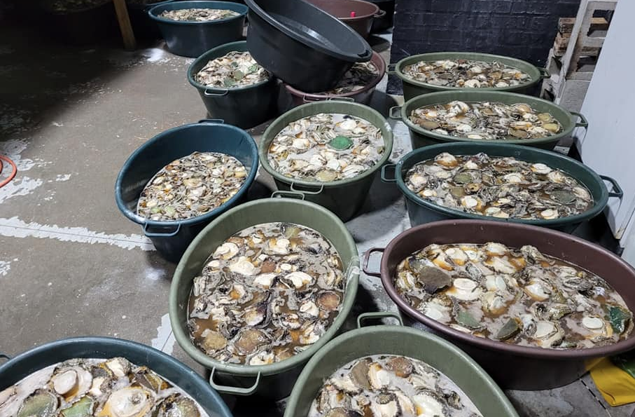 Police arrest nine foreign nationals for smuggling abalone in Cape Town