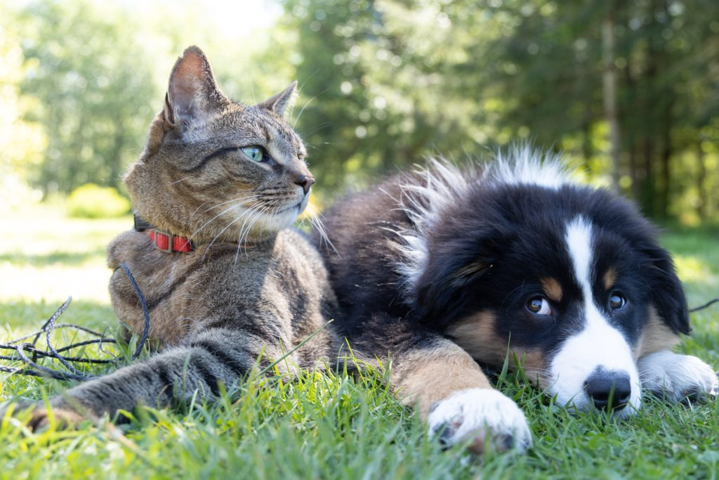 AWS SA calls on the public for donations to continue saving the lives of animals