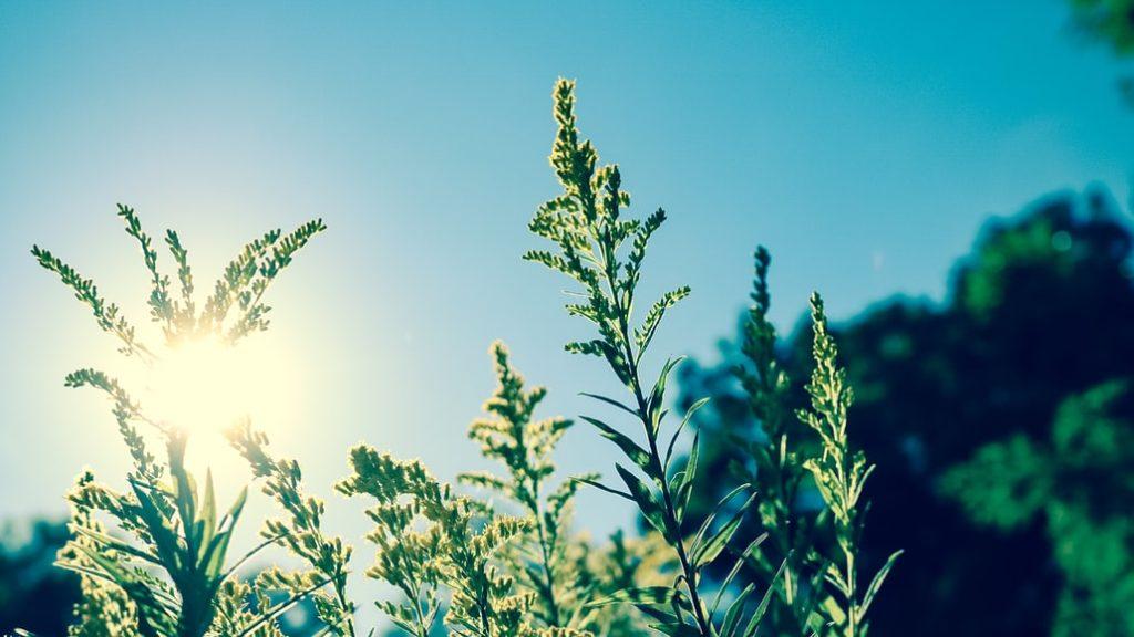 A touch of sunshine - Sunday Forecast