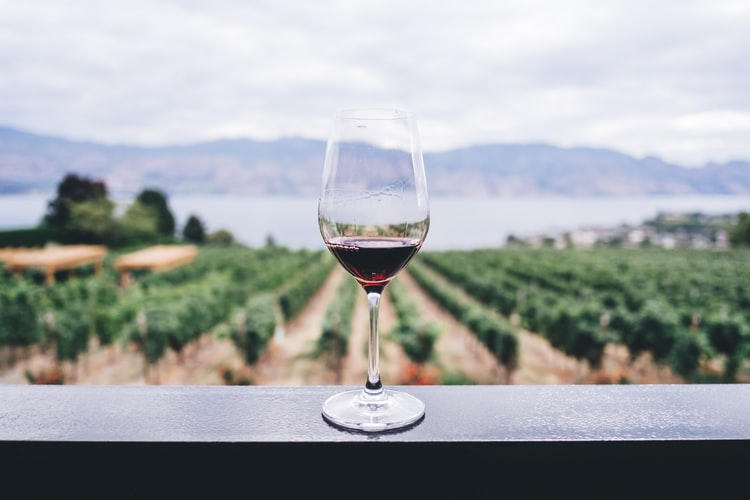 Wine farm in the WC claims top 10 spot in World's Best Vineyards competition